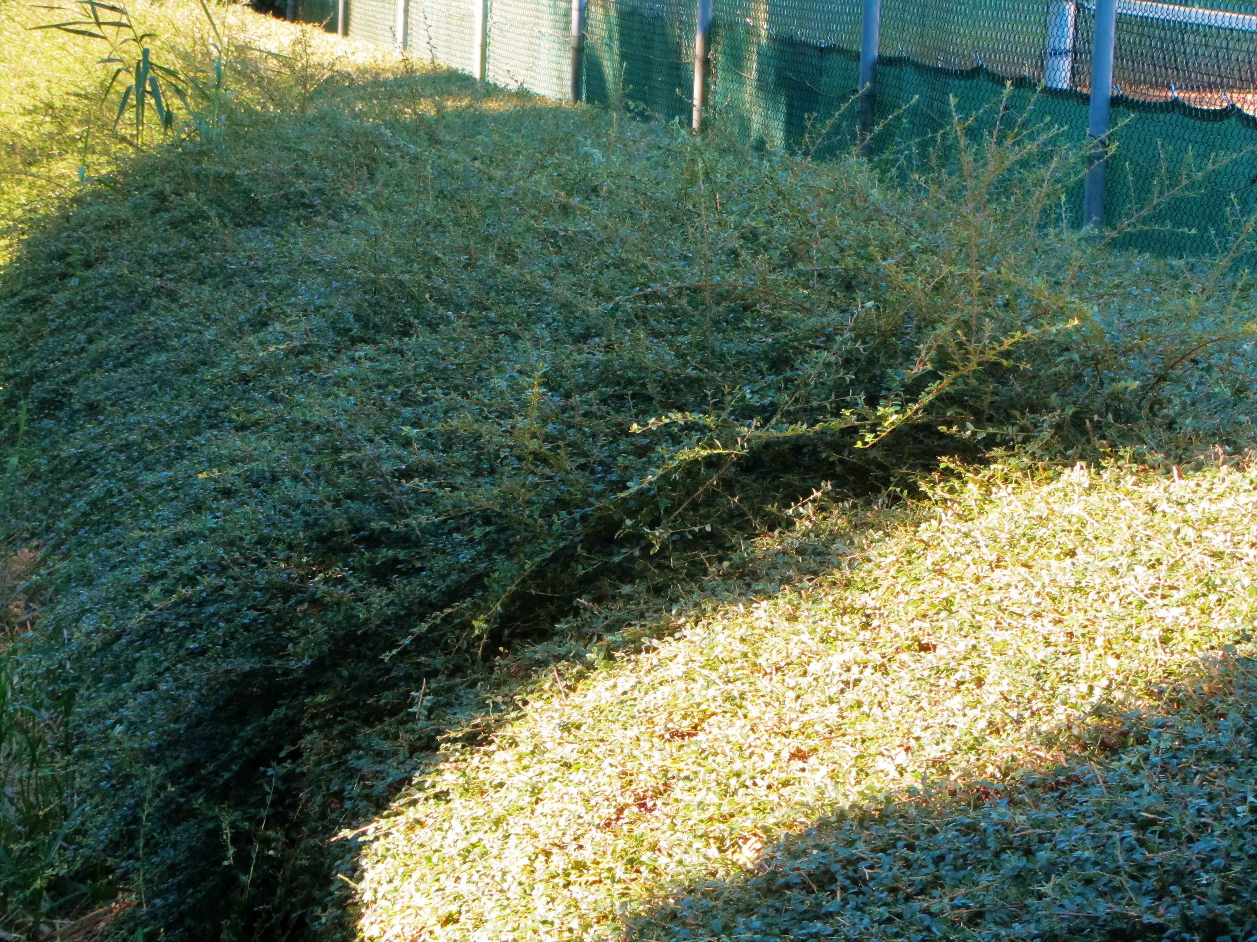 gras behandelen in de winter
