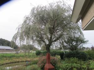 Bomen knotten 1